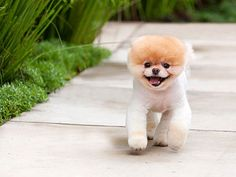 An Interview With Boo: The Worlds Cutest Dog  He is absolutely adorable.  Boo has 1.7 million Facebook Fans.