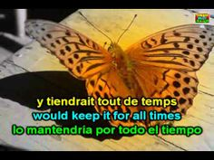 Learn French with - Danyel Gérard Butterfly - YouTube