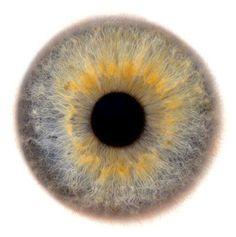 Beauty of the Human Eye