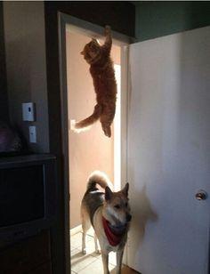 #Perros y #Gatos