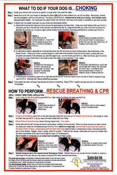 CPR for dogs and other first aid...