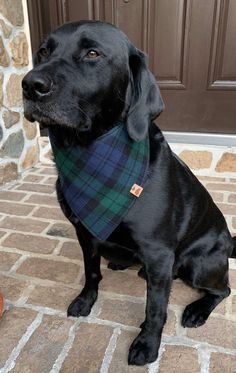 Traing your Dog the right way Schwarzer Labrador Retriever, Black Labrador Retriever, Retriever Dog, Black Lab Puppies, Cute Puppies, Cute Dogs, Corgi Puppies, Animals And Pets, Baby Animals