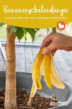 Natural Garden, Gardening Tips, Flower Power, Outdoor Gardens, Banana, Fruit, Vegetables, Green, Nature