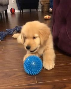 Cute Funny Dogs, Cute Funny Animals, Funny Babies, Cute Babies, Cute Puppies, Dogs And Puppies, Doggies, Chien Golden Retriever, Funny Dog Videos