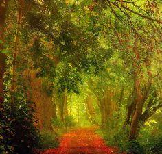 woodendreams:    (by EDWARD DULLARD PHOTOGRAPHY)
