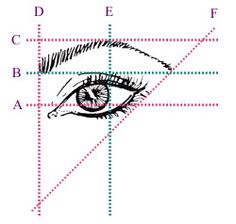 How To Get Perfect Arched Eyebrows? This is PROPER Way to get the Beautiful Eyebrow. Line D is lined up straight w/the outer edge of the nose and Line F the same outer edge of the nose, but at an angle.  Line E, Look straight a head and hold an edge where the outer iris is located, that is where the Top or highest part of your arch is.