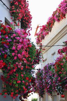 Balcones de Alcolea