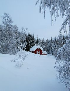 Little red cottage in the wood. by Mrs.Snowman, via Flickr