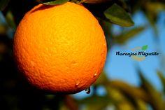 Naranjas y mandarinas recién recogidas del árbol