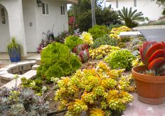 Our brand is a tribute to living with an environmental conscience - here's a nod to our current drought condition & #water savings! A tribute to the beauty of #succulents - this garden is at the entrance to a remodel we did in Vista, CA, transforming a Ranch-style home into a Spanish/Mediterranean home - www.homescapes-sd.com