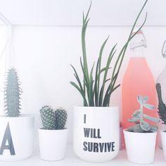I will survive plant pot