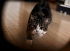 Happy Birthday Maru – A Compilation | The Animal Rescue Site Blog