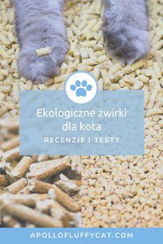 Ekologiczne żwirki zagoszczą w naszym domu na dobre. Pokochaliśmy je nie tylko ze względu na aspekt ekologiczny, ale również dlatego, że są bardzo łatwe w użytkowaniu. Dowiedz się, które żwirki dla kotów są według nas najlepsze i najbardziej ekologiczne! Fluffy Cat, Apollo, Lifestyle, Cats, Blog, Animals, Gatos, Animales, Animaux