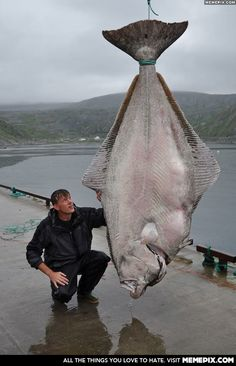 That's one BIG fish! Angler catches giant halibut that is heavier than a GORILLA. Halibut Fishing, Trout Fishing, Fishing Lures, Bass Lures, Bass Fishing Tips, Gone Fishing, Fishing Photos, River Monsters, Monster Fishing