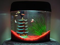 I like the way the gravel is done in this tank....super cool and different looking