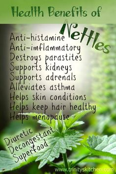 Health Benefits of Nettles + 'Very Nettle' Wild Soup Recipe The Health Benefits of Nettles + 'Very Nettle' Wild Soup Recipe!The Health Benefits of Nettles + 'Very Nettle' Wild Soup Recipe! Calendula Benefits, Lemon Benefits, Coconut Health Benefits, Nettle Benefits, Vegetable Benefits, Aromatherapy Benefits, Stomach Ulcers, All Nature, Healing Herbs