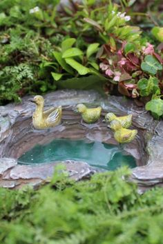 7+ Best Fairy Garden Ideas for Your Inspiration Indoor Fairy Gardens, Mini Fairy Garden, Fairy Garden Houses, Miniature Fairy Gardens, Fairies Garden, Garden Pond, Fairy Gardening, Hydroponic Gardening, Garden Pests