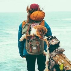 We at love our dogs, and love taking them with us on our various adventures. Put your dog in your favorite and set out on your next adventure with your best friend. Hiking Dogs, Camping Dogs, Dog Travel, Koh Tao, Mans Best Friend, Trekking, Kayaking, Adventure Travel, Fur Babies