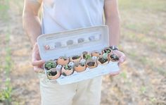eggshell seedlings. plant the whole thing