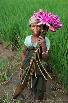 A woman collects water lilies Fuchsia Flower, Magenta, India Design, Kerala India, Working People, Water Lilies, Illustrations, Incredible India, Beautiful World
