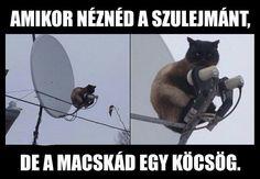 Ilyen macskát!! 😂😂