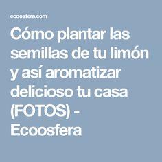 Cómo plantar las semillas de tu limón y así aromatizar delicioso tu casa (FOTOS) - Ecoosfera