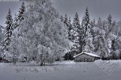 Lato - lato hirsilato hirsi puu käsityö heinälato maisema talvimaisema talvi kylmä kuura pakkanen metsä lappi pohjoinen  luonto  koivu kuusi vanha pelto maatila maatalous harmaa