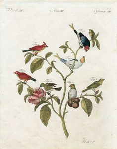 1790 Antique Hummingbird Print Original Hand by AntiquePrint