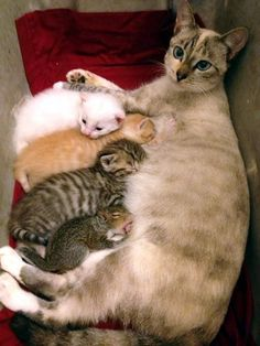A mother cat had just given birth to her own litter of kittens, but was happy to adopt two orphaned baby squirrels.