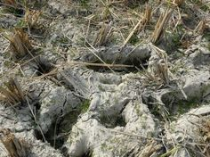 Soil 1 5 Photo by Aditya Roy -- National Geographic Your Shot