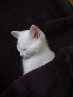 catcatkitty