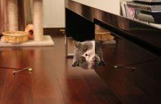 Peek a boo...I see you !!!
