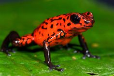 tropical rainforest animals and plants | Animals of Tropical Rainforests