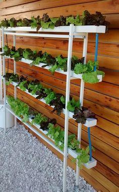 Combos de cultivo | HIDROPONIA