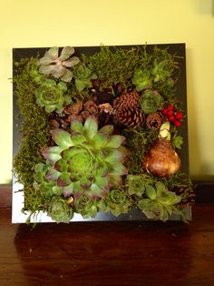 Living succulent wall art
