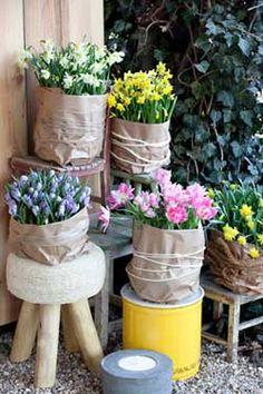 Voorjaar Tuin Bloemen