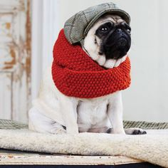 Hand-knit wool scarves for fashion-forward dogs from UK company Love My Dog.