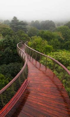 Canopy Walkway in Cape Town that Lets You Walk Above the Trees