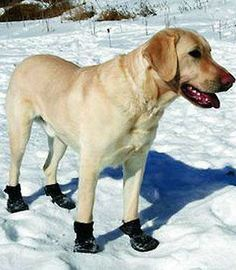 This winter, don't forget to protect your pet's paws from the freezing temperatures.