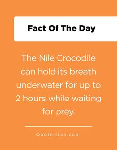 The Nile Crocodile can hold its breath underwater for up to 2 hours while waiting for prey. Fact Of The Day, Word Of The Day, Quote Of The Day, Nile Crocodile, Underwater, Breathe, Waiting, Hold On, Life Quotes