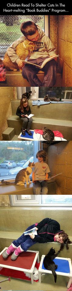 """Children Read to Shelter Cats In The """"Book Buddies"""" Program."""