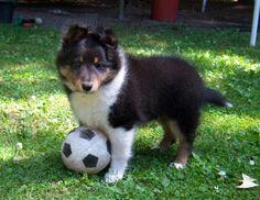 Tri Soccer Star