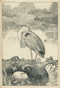"""Aesop's Fables. Illustrated by Louis J. Rhead. New York, Harper & Bros. .1927. """"Frogs asking for a king."""""""