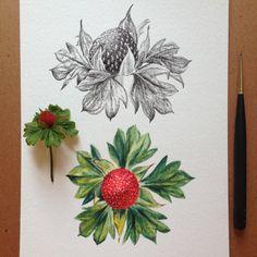 дикий вид ягода х 2