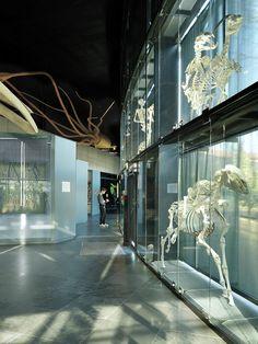 Museum du Toulouse