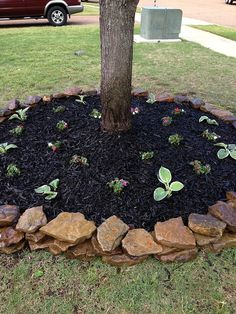 """Adding a short stacked stone to complement a solitary tree makes the area look """"dressed"""". I can't wait to do this for the two single trees in my back yard!"""