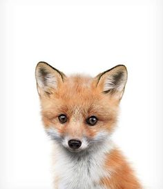 Fox print PRINTABLE art Fox wall art Nursery decor Animal