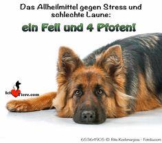 Das Allheilmittel gegen Stress und schlechte Laune: Ein Fell und viel Pfoten!