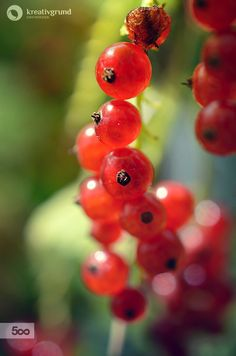 Red Currants are growing in my garden #nature