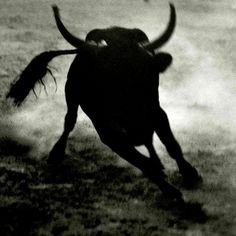 The one and only Bull - Matt Mahurin